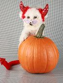 pic of she devil  - Fifi the Purebred Bichon Frise smiles as she modesl in her DEVIL DOG costume with her pumpkin against a black and white background - JPG