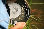 stock photo of gold nugget  - gold panning - JPG