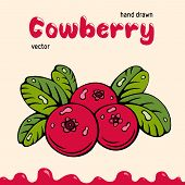 Cowberry Vector Illustration, Berries Images. Doodle Cowberry Vector Illustration In Red And Green C poster