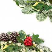 Winter and Christmas background border with holly berries, snow covered spruce pine, ivy, pine cones poster