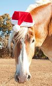 stock photo of horse wearing santa hat  - Santa - JPG