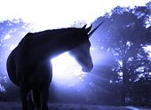 picture of hazy  - Image of a magical unicorn against hazy sunrise with sun rays - JPG