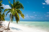 Island Paradise - Palm trees hanging over a sandy white beach with stunning turquoise waters and whi