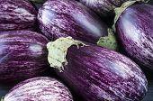 Background Of Fresh Eggplant. Aubergine Vegetable. Purple Eggplant (aubergine). Top View. Purple Foo poster