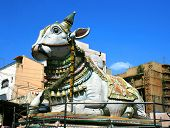 stock photo of meenakshi  - Nandi near by Sri Meenakshi hindu temple in Madurai - JPG