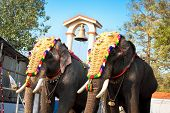 stock photo of parade  - Decorated elephants for parade at the annual festival in Siva Temple - JPG