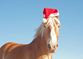 picture of horse wearing santa hat  - Humorous image of Santa - JPG