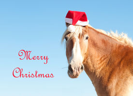 pic of horse wearing santa hat  - Belgian Draft horse wishing Merry Christmas as Santa - JPG