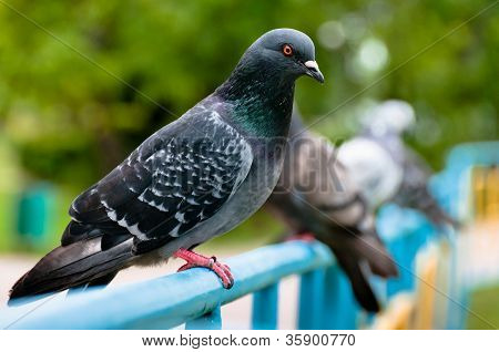 Pigeon Sitting On Support In Park