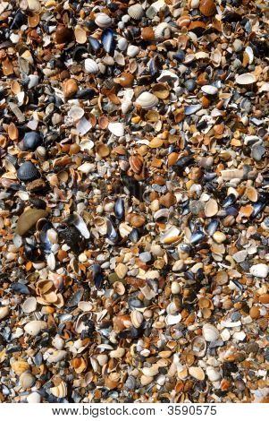 Sand And Shells On The Beach