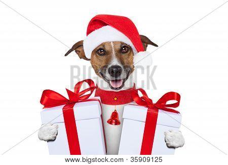 Cão de Natal
