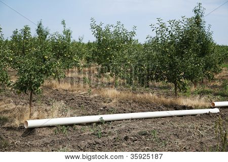 water pipe in orchard