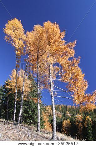 Trees during autumn season