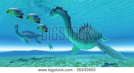 Sea Dragon Fight