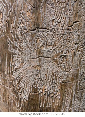 Texture Of Dry Tree