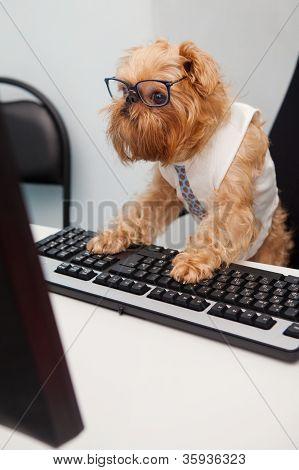 Gerente de perro
