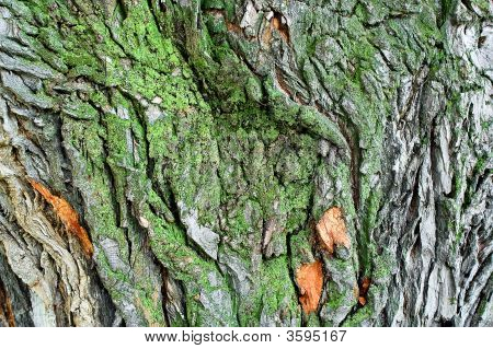 Bark Of The Tree, It Grows Green Lichen