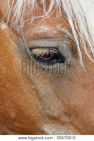 Horse Head - macro