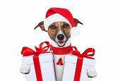 image of christmas puppy  - santa christmas dog with two big gifts - JPG