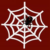 picture of black widow spider  - Black Widow Spider in a Web on a red background - JPG