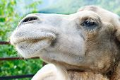 pic of hump day  - shot of the camel - JPG