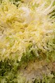 stock photo of escarole  - Escarole for image backgrounds and food illustrations - JPG