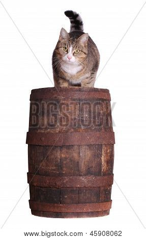 Cute Cat Sitting On Wooden Barrel