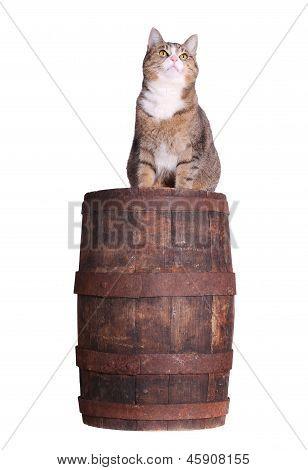 Snoopy Cat On Barrel