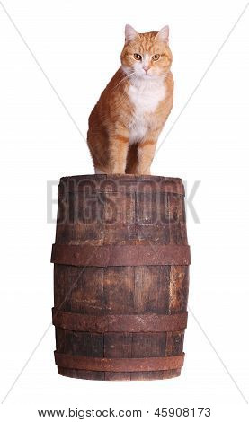 Cat On Wooden Barrel