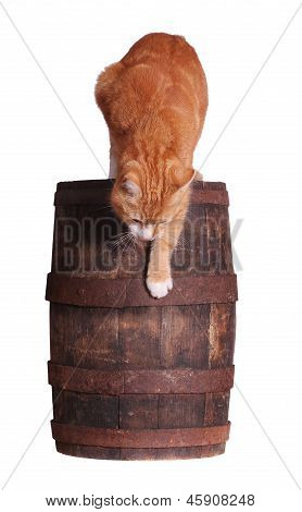 Cat And Wooden Barrel