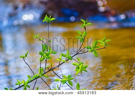 elm tree branch over water in spring with a beautiful background