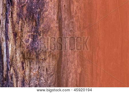 Tree Bark Detail For Copy Or Texture