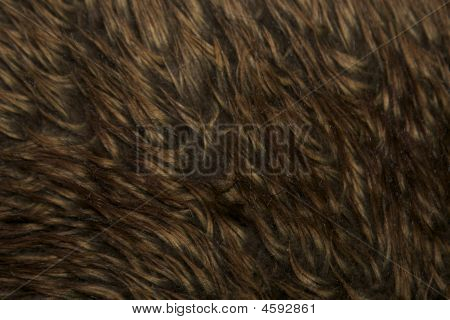 Brown Fur Background