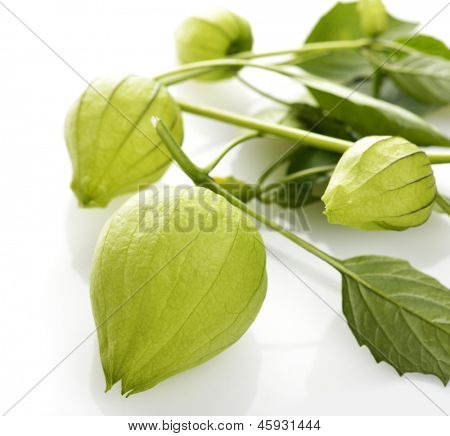 Tomatillo Plant On White Background