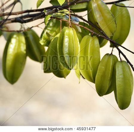 Carambola Or Starfruit On A tree