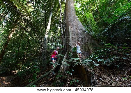 Two young ladies standing by a huge tree in tropical forest