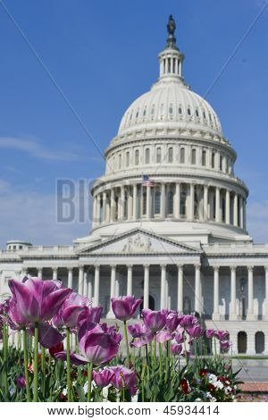 US Capitol Building with tulips foreground in spring - Washington DC, United States