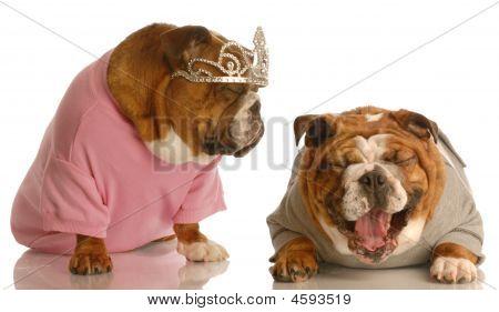Bulldog Laughing At Dog With Tiara