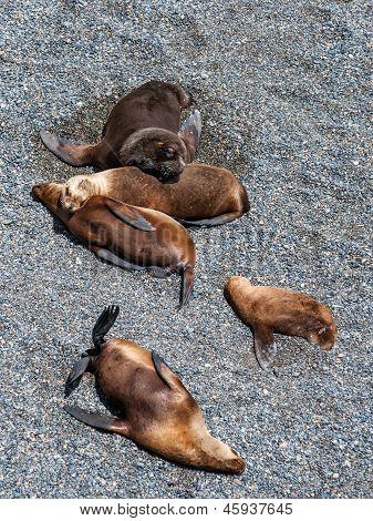Sea Lions Near Puerto Madryn, Argenina