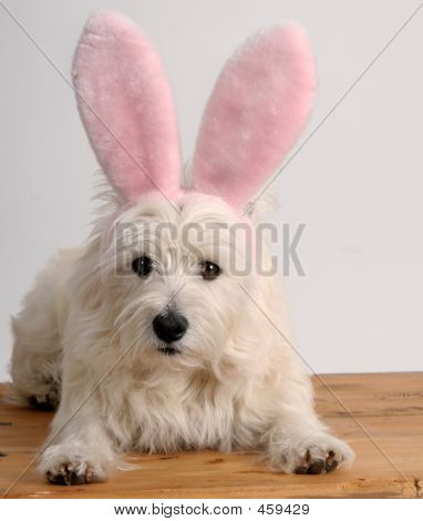 Easter Westie