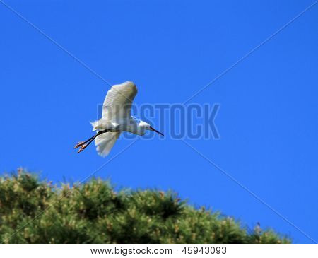 Egret Flying From Tree