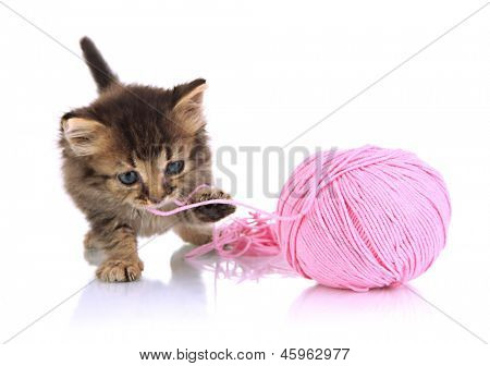 Small kitten play with yarn for knitting isolated on white