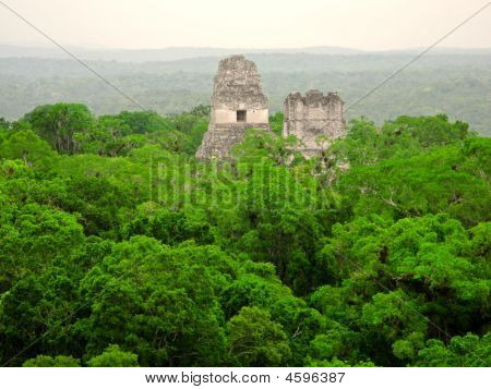 Mayan Temple  In The Forest, Tikal
