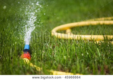 Garden water hose on a well groomed freshly cut grass