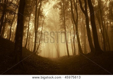 Forest with fog and dark trees at sunset