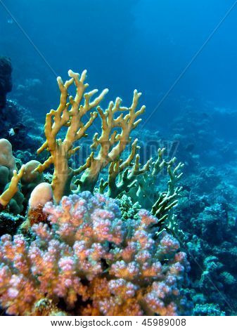 coral reef with yellow fire and hard corals at the bottom of tropical sea