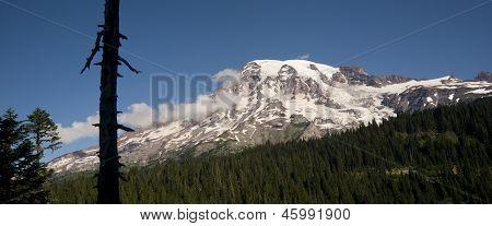 Horizontal Composition Mt. Rainier Dense Forest Cascade Range Washington
