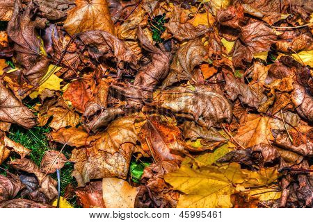 Colorful Autumn Leaves Background In Hdr High Dynamic Range