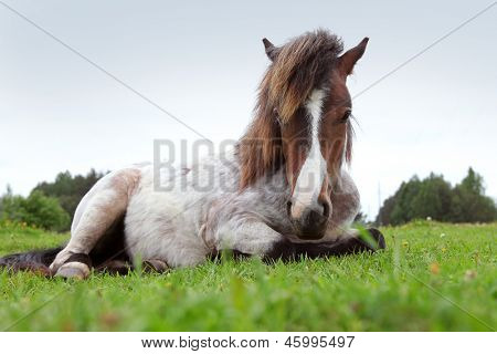 beautiful pony on the field