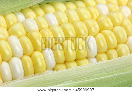 Corn On The Cob Closeup